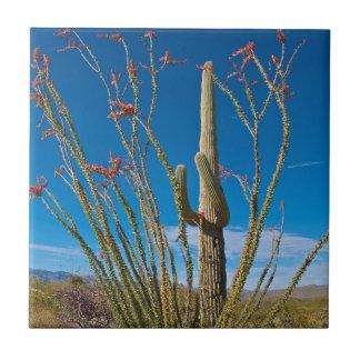USA, Arizona. Cactus In Saguaro National Park Tile