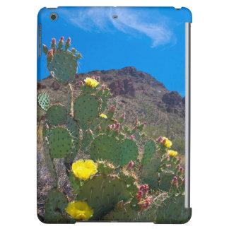USA, Arizona. Cactus In The Hills