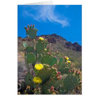 USA, Arizona. Cactus In The Hills Card