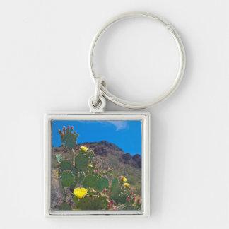 USA, Arizona. Cactus In The Hills Key Ring