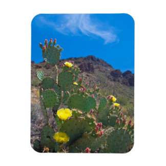 USA, Arizona. Cactus In The Hills Magnet