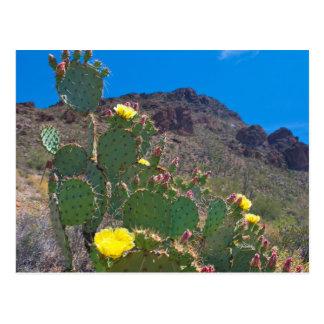 USA, Arizona. Cactus In The Hills Postcard