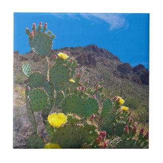 USA, Arizona. Cactus In The Hills Tile