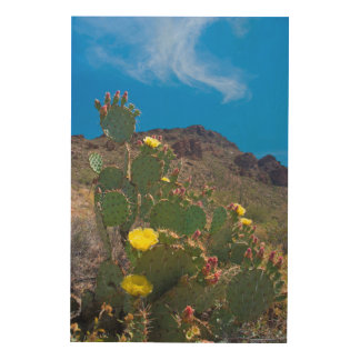 USA, Arizona. Cactus In The Hills Wood Wall Art