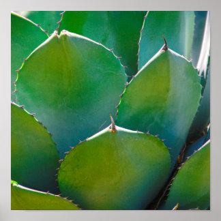 USA, Arizona. Close-Up Of Succulent Plant Poster