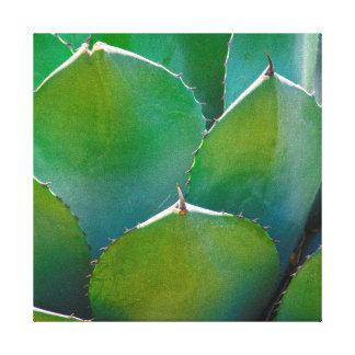 USA, Arizona. Close-Up Of Succulent Plant Stretched Canvas Print