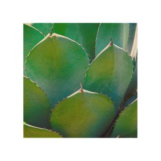 USA, Arizona. Close-Up Of Succulent Plant Wood Print
