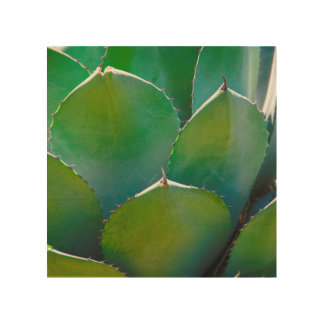 USA, Arizona. Close-Up Of Succulent Plant Wood Wall Decor