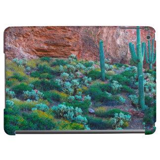 USA, Arizona. Desert Flora