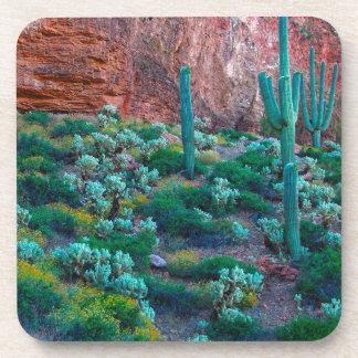 USA, Arizona. Desert Flora Coasters