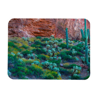 USA, Arizona. Desert Flora Magnet