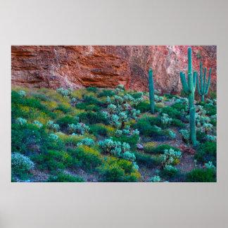USA, Arizona. Desert Flora Poster