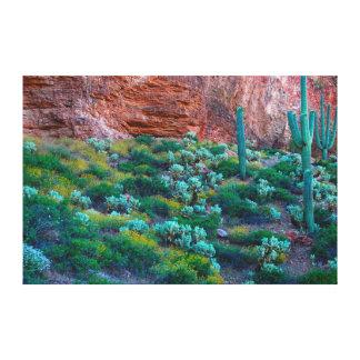 USA, Arizona. Desert Flora Stretched Canvas Print