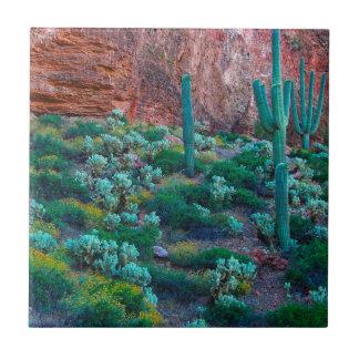 USA, Arizona. Desert Flora Tile