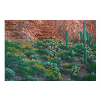 USA, Arizona. Desert Flora Wood Wall Art