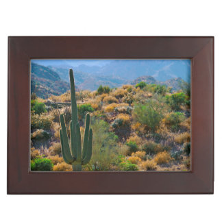 USA, Arizona. Desert View Memory Box