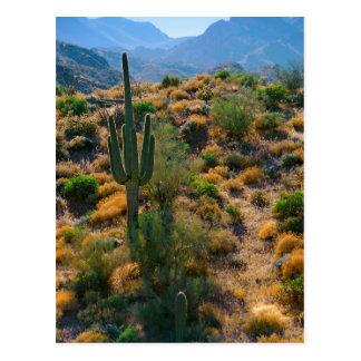USA, Arizona. Desert View Postcard