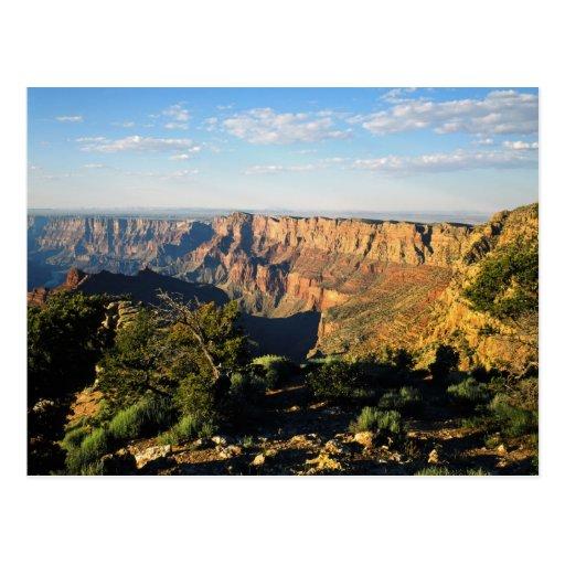 USA, Arizona, Grand Canyon National Park, View Postcard