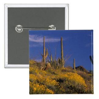 USA, Arizona, Organ Pipe Cactus National 2 15 Cm Square Badge