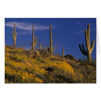 USA, Arizona, Organ Pipe Cactus National 2 Card
