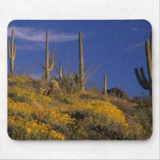 USA, Arizona, Organ Pipe Cactus National 2 Mouse Pad
