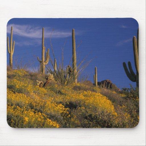 USA, Arizona, Organ Pipe Cactus National 2 Mousepads