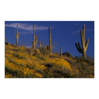 USA, Arizona, Organ Pipe Cactus National 2 Poster