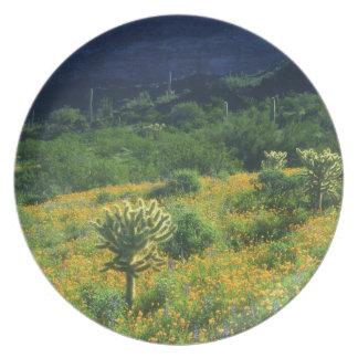 USA, Arizona, Organ Pipe Cactus National Plate