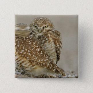 USA, Arizona, Phoenix. One of pair of burrowing 15 Cm Square Badge