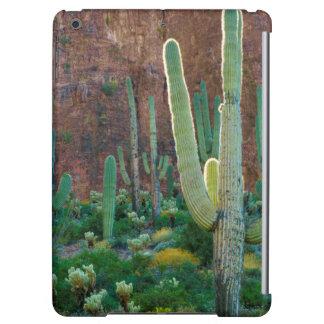 USA, Arizona. Saguaro Cactus Field By A Cliff
