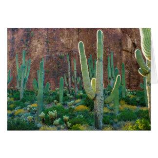 USA, Arizona. Saguaro Cactus Field By A Cliff Card