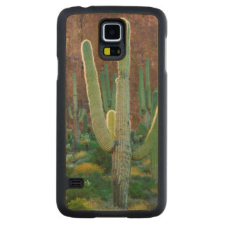 USA, Arizona. Saguaro Cactus Field By A Cliff Carved Maple Galaxy S5 Case