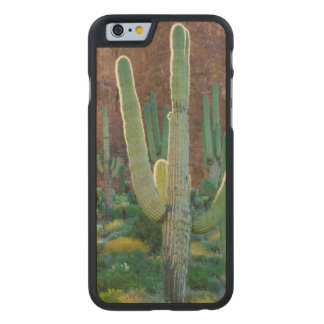 USA, Arizona. Saguaro Cactus Field By A Cliff Carved Maple iPhone 6 Case