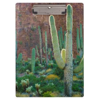 USA, Arizona. Saguaro Cactus Field By A Cliff Clipboard