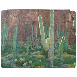 USA, Arizona. Saguaro Cactus Field By A Cliff iPad Cover