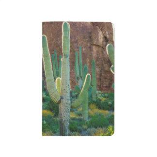 USA, Arizona. Saguaro Cactus Field By A Cliff Journal