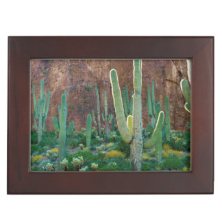 USA, Arizona. Saguaro Cactus Field By A Cliff Keepsake Box
