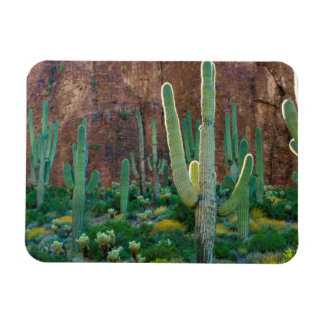 USA, Arizona. Saguaro Cactus Field By A Cliff Magnet