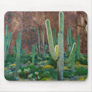 USA, Arizona. Saguaro Cactus Field By A Cliff Mouse Mat