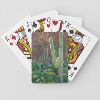 USA, Arizona. Saguaro Cactus Field By A Cliff Playing Cards