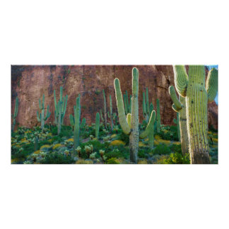 USA, Arizona. Saguaro Cactus Field By A Cliff Poster