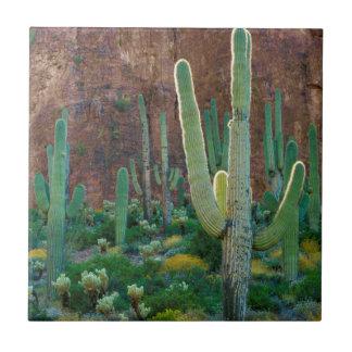 USA, Arizona. Saguaro Cactus Field By A Cliff Tile