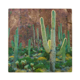 USA, Arizona. Saguaro Cactus Field By A Cliff Wood Coaster