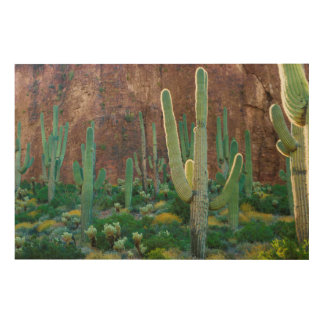 USA, Arizona. Saguaro Cactus Field By A Cliff Wood Print