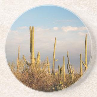USA, Arizona, Saguaro National Park, Saguaro Coaster