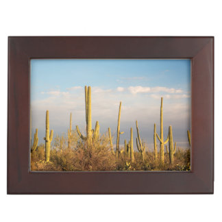 USA, Arizona, Saguaro National Park, Saguaro Keepsake Box