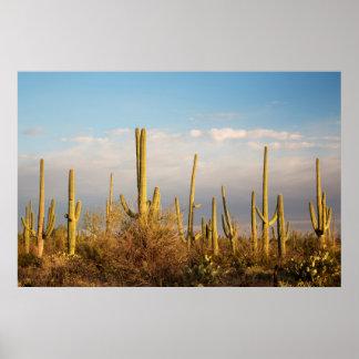 USA, Arizona, Saguaro National Park, Saguaro Poster