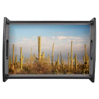 USA, Arizona, Saguaro National Park, Saguaro Serving Tray