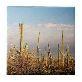 USA, Arizona, Saguaro National Park, Saguaro Tile