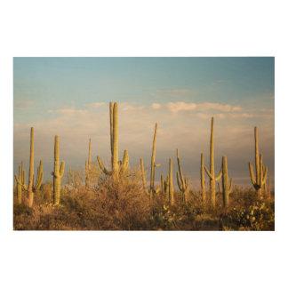 USA, Arizona, Saguaro National Park, Saguaro Wood Wall Decor